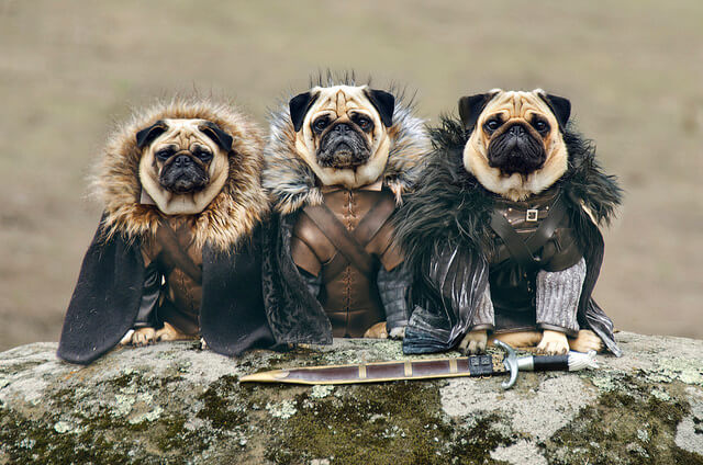 Cosplay, chiens, bulldog, Game of Thrones